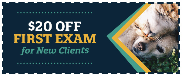$20 Off First Exam for New Clients